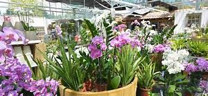 Orchideen Umtopfen Video : orchideen plege umtopfen daglfinger blumenhof ~ Watch28wear.com Haus und Dekorationen