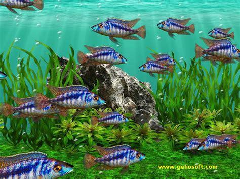3d Animated Fish Wallpaper - free fishing screensavers and wallpaper wallpapersafari