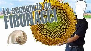 La Secuencia De Fibonacci  En 3 Minutos    Explainers