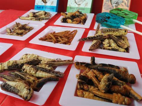 insectes cuisine manger des insectes en c 39 est interdit sur le
