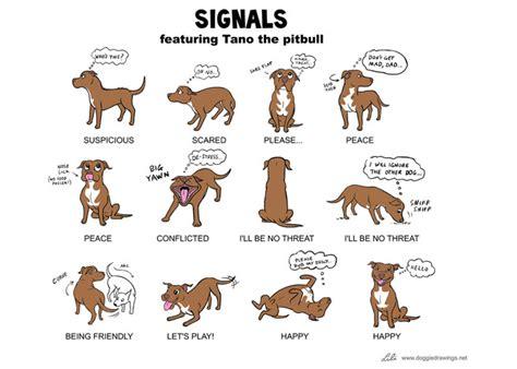 signalen hondsdomheid