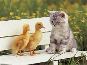 The Myth of the Ugly Duckling « judgmental observer