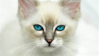 Cat Cats Eyes Cool Wallpapers Animal Eye