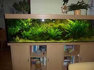 Komplett Aquarium Kaufen : komplett aquarium 600l in n rnberg fische aquaristik kaufen und verkaufen ber private ~ Eleganceandgraceweddings.com Haus und Dekorationen