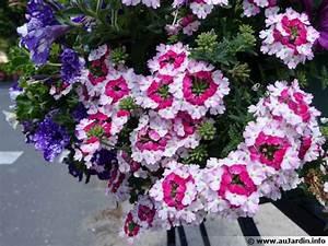 Comment Remplir Une Grande Jardinière : composer une belle jardini re de printemps ~ Melissatoandfro.com Idées de Décoration
