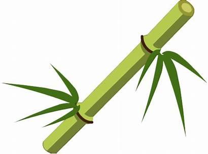 Bamboo Stick Transparent Clipart Webstockreview