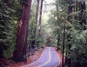 Big Basin Redwoods State Park - Boulder Creek, California