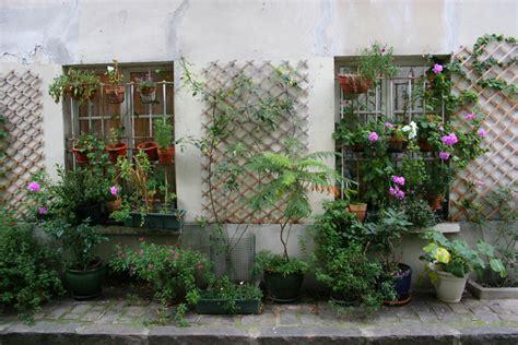 plante grimpante en pot pour balcon planter et semer dans la rue devant la maison