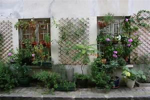 Plantes Grimpantes Pot Pour Terrasse : fleurs grimpantes en pot ~ Premium-room.com Idées de Décoration