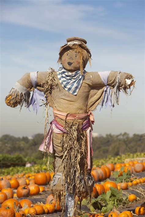 Pumpkin Contest Winners by How To Make A Scarecrow That Actually Works