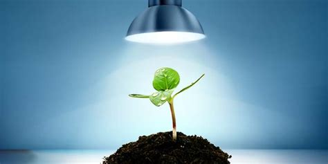 best grow lights for seedlings led grow lights the best choice for indoor plants gardens