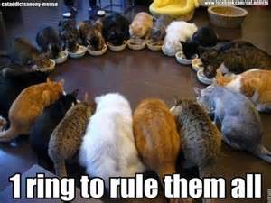 lord of the cats lord of the cats cafemom answers