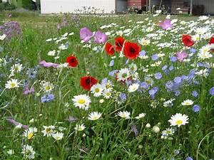 Graines Fleurs Des Champs : fleurs des champs graines bertrand ~ Melissatoandfro.com Idées de Décoration