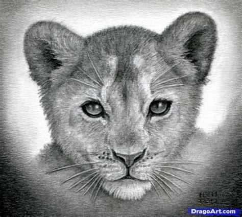 draw  lion cub lion cubs step  step safari