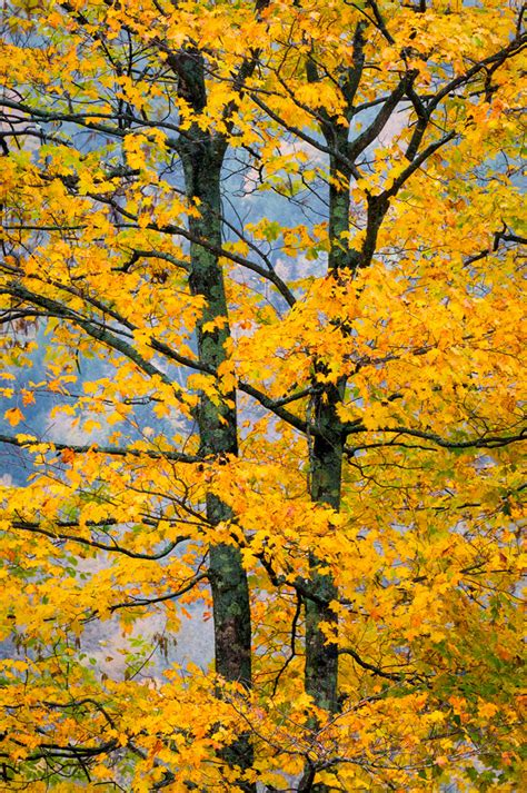 graceful autumn green mountain national forest vermont