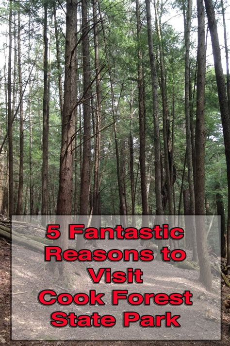 5 Reasons To Visit Cook Forest State Park On