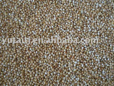 yellow millet bird feed bird seed bird food products china