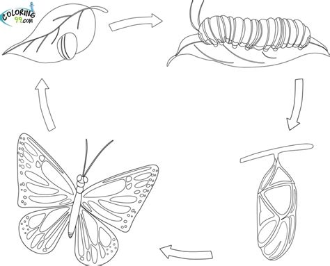 coloring pages butterfly life cycle jg