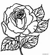 Coloring Rose Pages Printable Cool2bkids Roses Sheets Cross Drawing Flower Bush Skull Print Abstract Getdrawings Getcolorings Tattoo Clipartmag sketch template