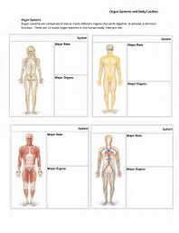 Worksheets Organ Systems Worksheet best 25 ideas about body systems find what youll love human organ worksheet