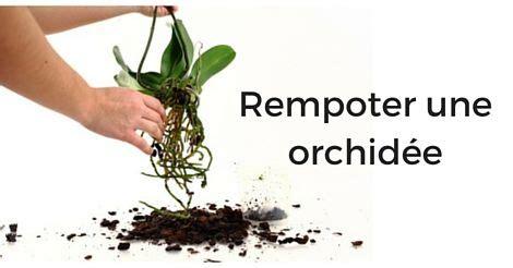 tailler une orchidee en pot les 25 meilleures id 233 es concernant fleurs tropicales sur plantes tropicales