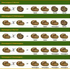 22 Best Ball Pythons Images Ball Python Python Ball