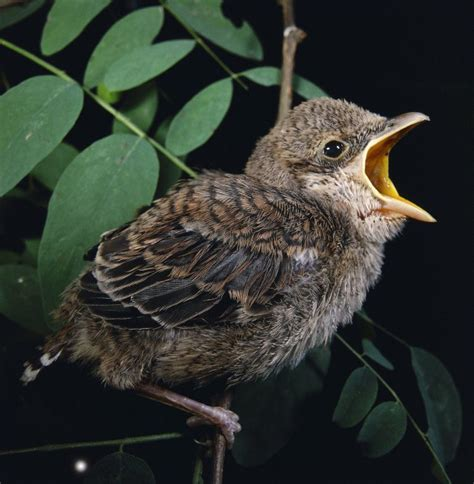 why do birds sing in the morning metro news