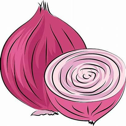 Onion Clipart Common Clip Vector Clipground Illustration
