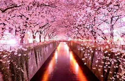 Cherry Blossom Japanese Wallpapers Wallpaperaccess
