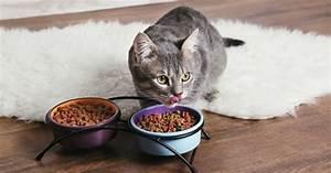 Que Donner A Manger A Un Ecureuil Sauvage : ce qu 39 aime manger le chat alimentation du chat wamiz ~ Dallasstarsshop.com Idées de Décoration