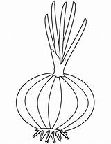 Coloring Pages Onions Adults Printable sketch template
