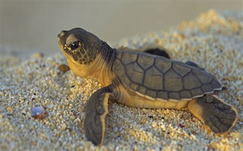 Images Of Turtles Turtle Wallpaper 59 Images