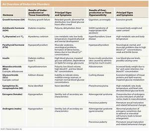 Endocrine System Functions And Parts