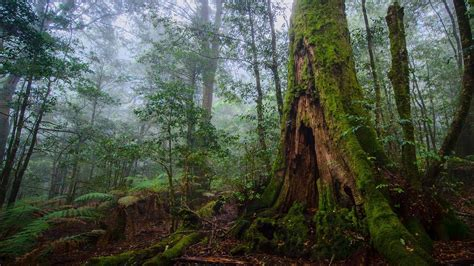 Forest, Nature, Ultrahd Beautiful Nature, Forest, Hd,tree