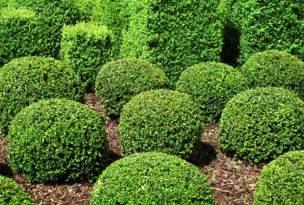 bush ideas best shrubs bushes landscaping designs ideas pictur