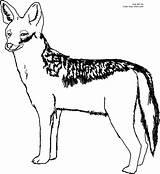 Coyote Jackal Preschoolcrafts sketch template