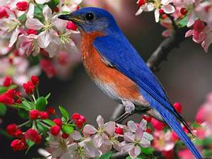 Free Games Wallpapers: Latest Birds Wallpapers-Download ...