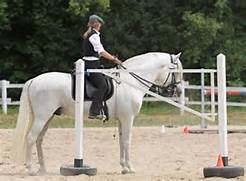 Working Equitation At ...