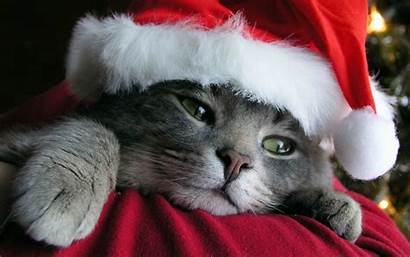Pets Christmas Wallpapers Cats Pet Cat Animals