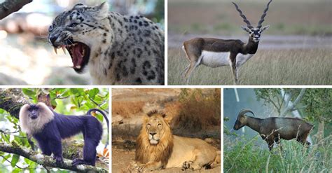 7 Rare and Exotic Wildlife Species that can be found in