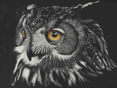 Black Owl Wallpapers by Black And White Owl Wallpapers Top Free Black And White