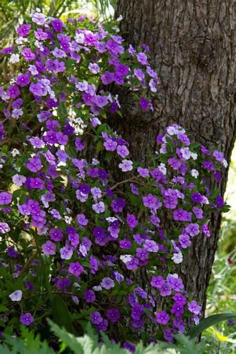 farbenfrohe schattenpflanzen fuer ihren garten