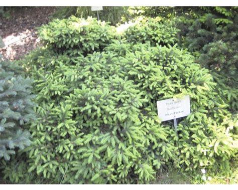 Pflanzen-set Vorgarten Sonne 4, 3 Stk Bei Hornbach Kaufen