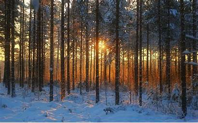 Forest Winter Sunset Landscape Nature Trees Wallpapers