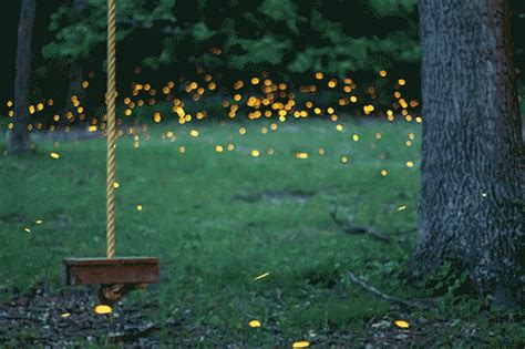field of fireflies gif field of fireflies gifs field of fireflies animated gif field of
