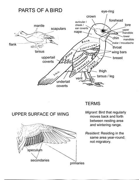 worksheet   area  science  birds parts