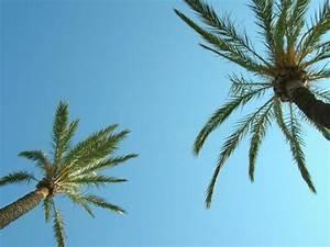 überwintern Von Palmen : palmen in mallorca foto bild pflanzen pilze ~ Michelbontemps.com Haus und Dekorationen