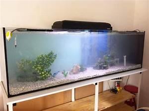 Combien Coute Un M3 De Gravier : quel poisson et combien pour mon 600 litres ~ Dailycaller-alerts.com Idées de Décoration