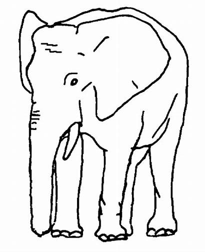 Elephant Coloring Pages African Indian Elephants Animal