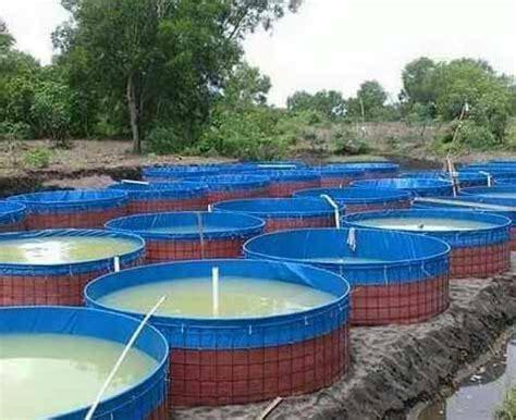 Jual Kolam Terpal Mojokerto persiapan lahan dan kolam untuk budidaya ikan lele kolam